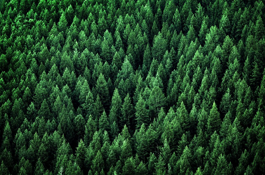 Tree Planting Projects | Environmental Protection & Conservation Services